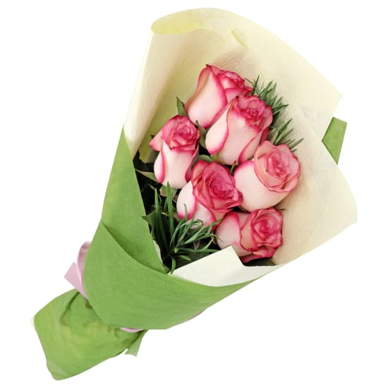 Paloma Roses - Standard