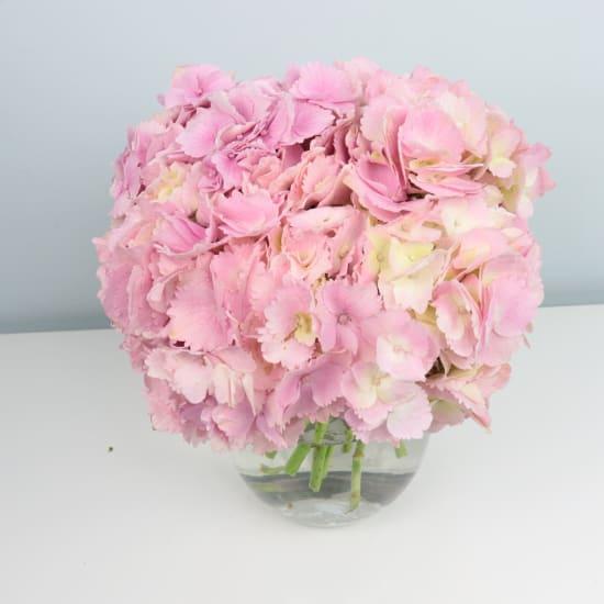 Hydrangea Vase - Standard