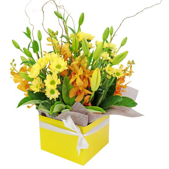 Botanique - Yellows - Standard