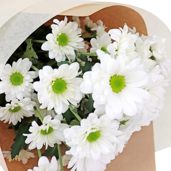Chrysanthemum Bunch - White - Standard