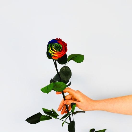 Preserved Rainbow Rose - Standard