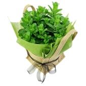 Perfect Pick Mint Plant