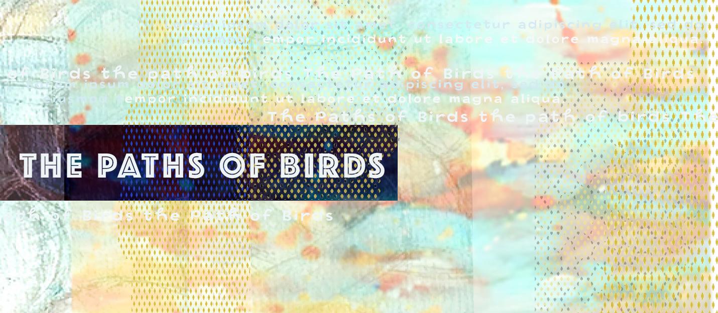 path of birds