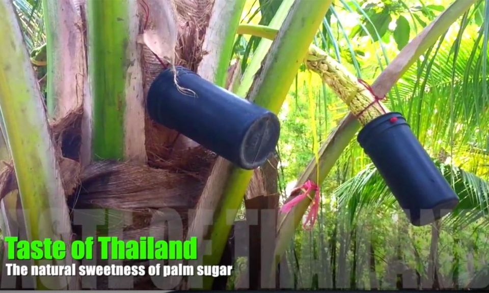 Making palm sugar in Thailand