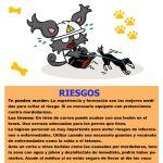 Let's Prevent! - Nuevas fichas informativas: Riesgos para Entrenadores y cuidadores de perros
