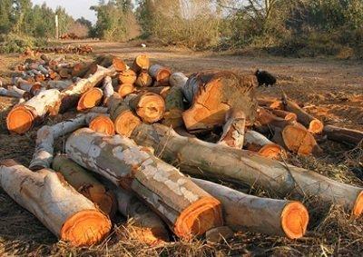 Let's Prevent! - Accidentes: Fallece tras caerle encima un pino en la Coruña