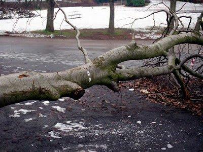 ejemplo desplome de árbol