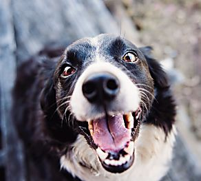 5 Things To Do With Your Newly Adopted Dog