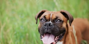 Wag! Walking Their Way into the Pet Care Industry