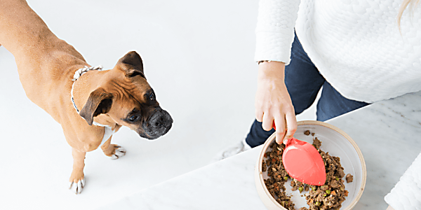 Ollie Dog Food: Real Dog Food With Real Love