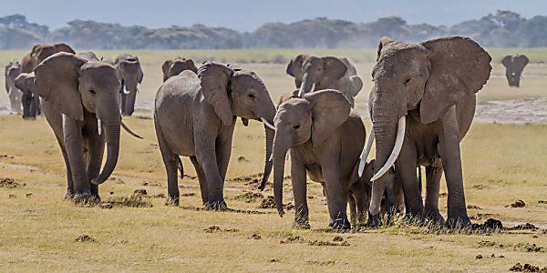 Saving the Elephants Starts with Your Pants