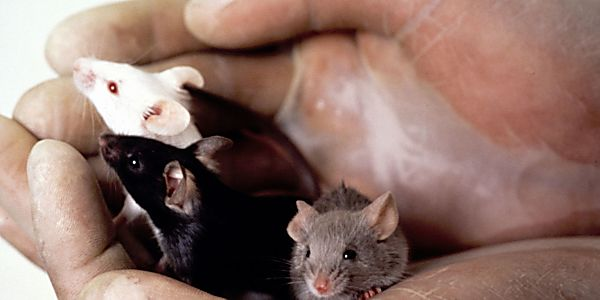 Is this the Beginning of the End for Animal Testing?