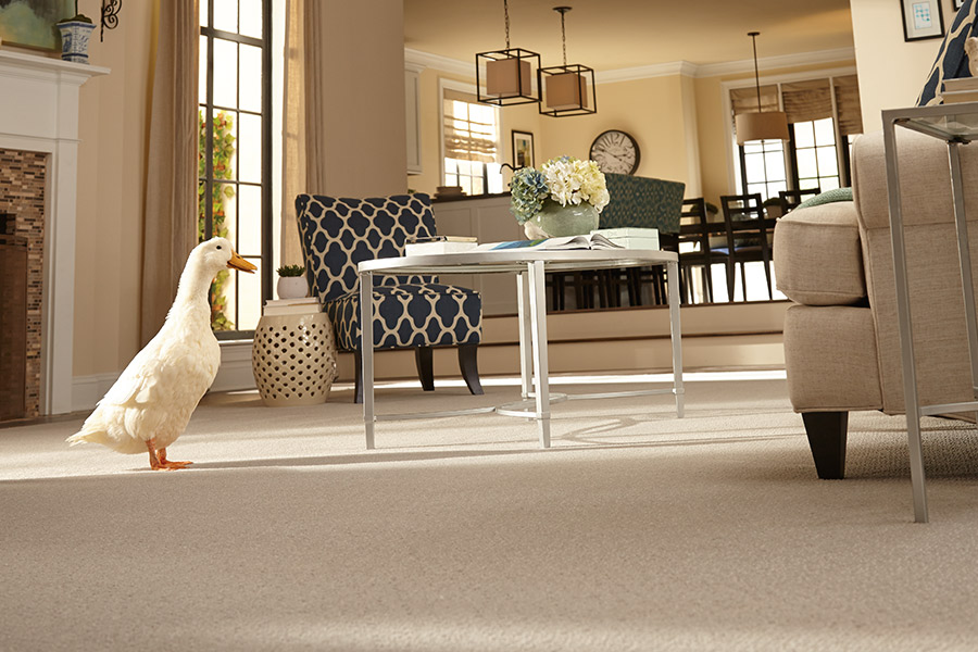 Carpeting in Ivins, UT from Pioneer Floor Coverings & Design