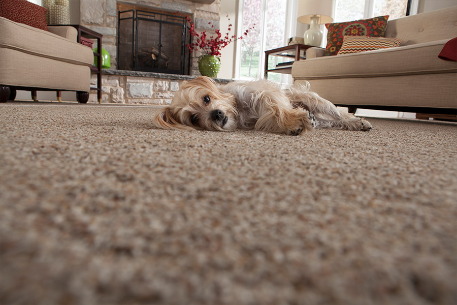 Beautiful textured carpet in Clayton, MO from Champion Floor Company