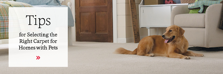 Tips for selecting the right carpet for homes with pets