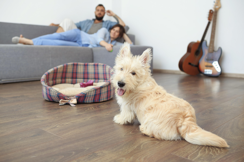 Flooring design professionals in the Lapeer, MI area - Brough Carpets