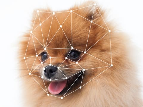 Image recognition of a dog