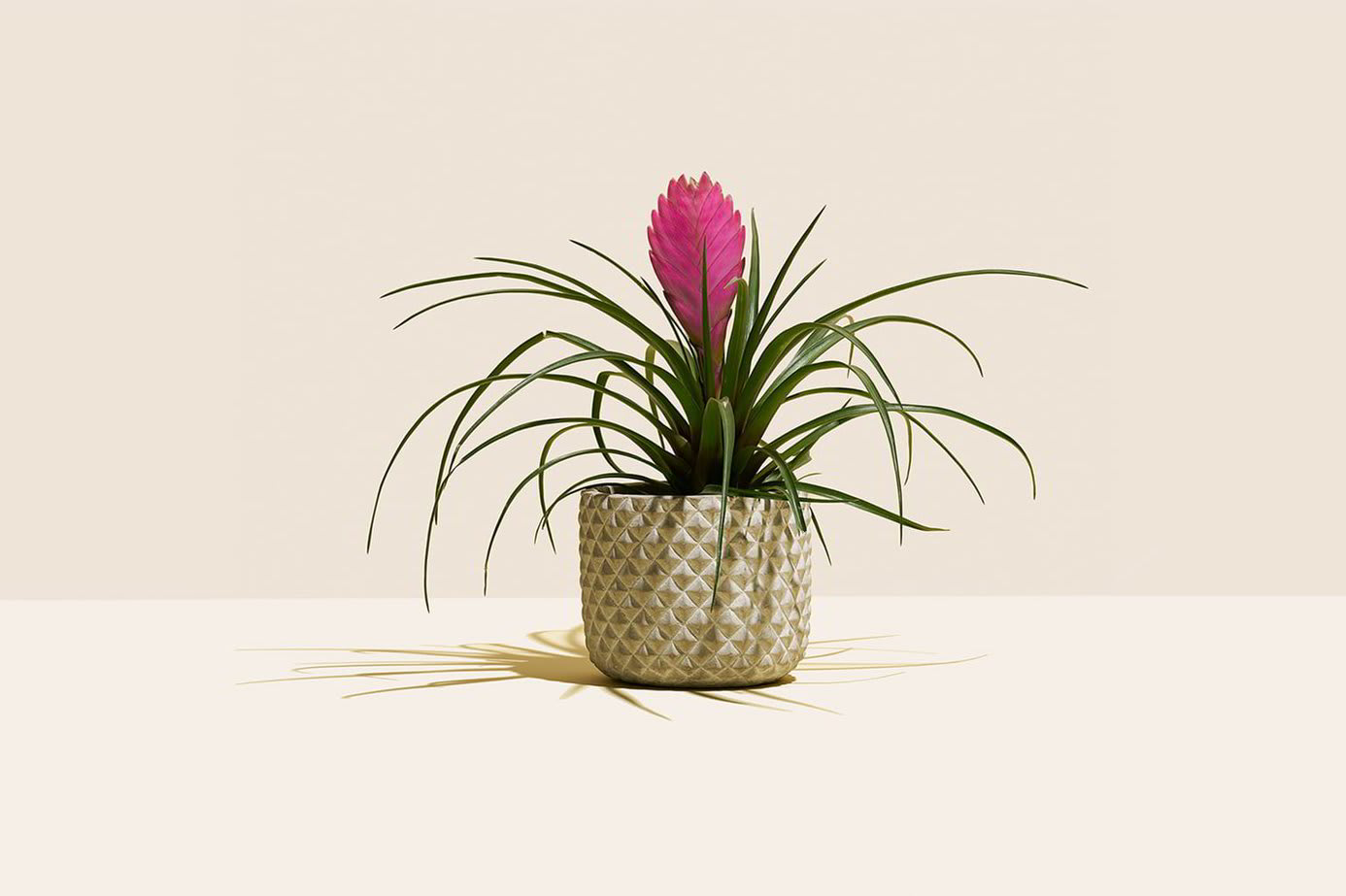 A small houseplant