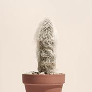 A fuzzy cactus