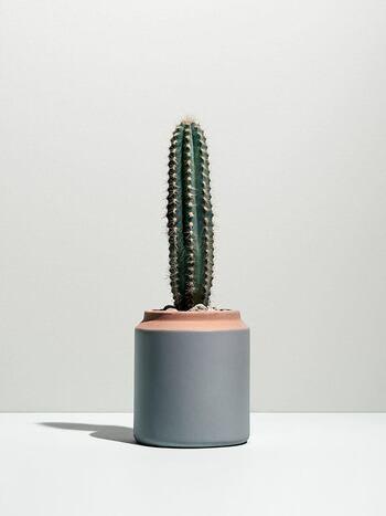 An upright cactus