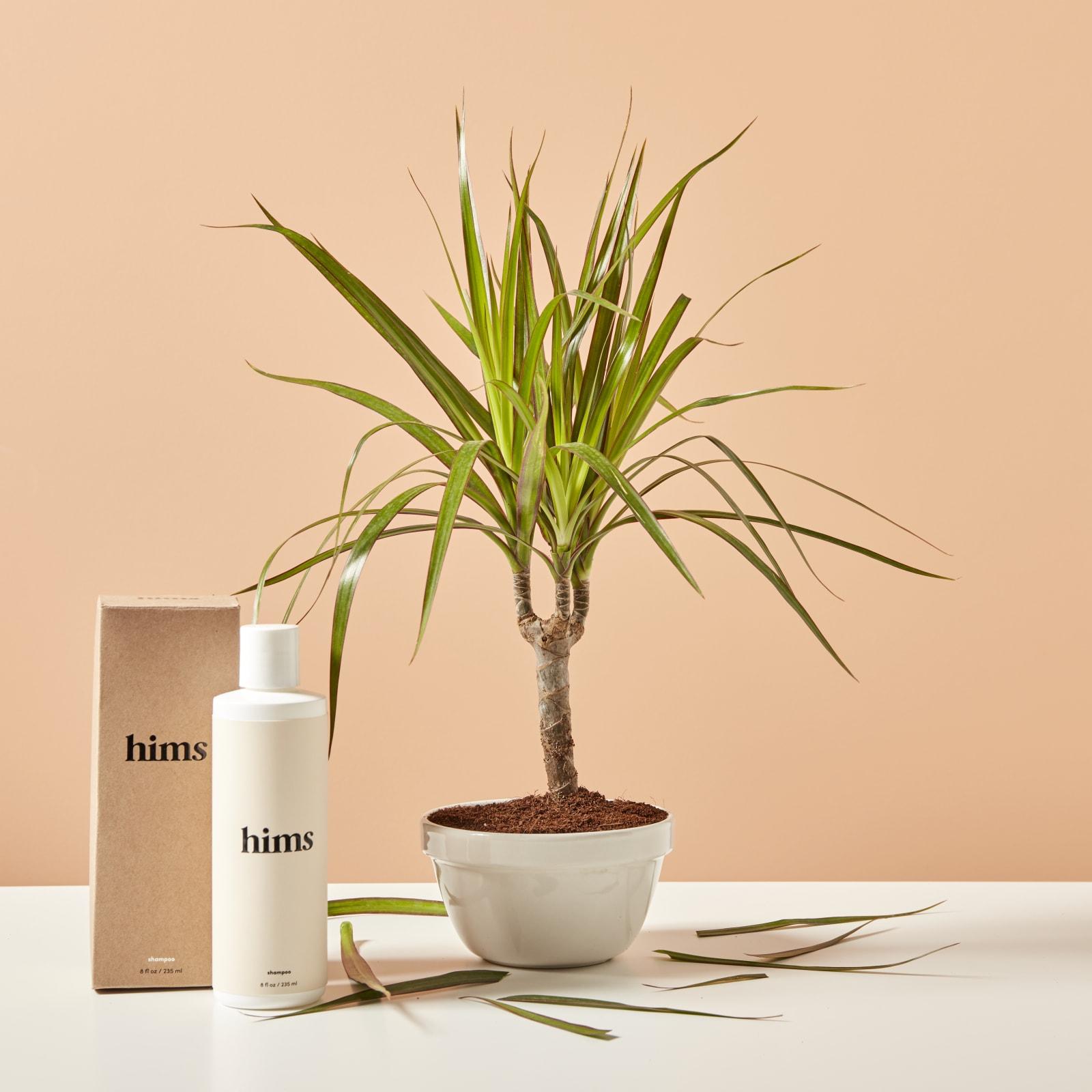 shampoo bottle with plant