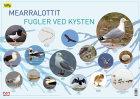 Mearralottit = Fugler ved kysten