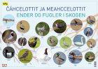 Cáhcelottit ja meahccelottit = Ender og fugler i skogen