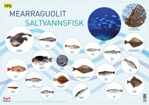 Mearraguolit = Saltvannsfisk