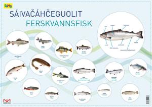 Sáivacáhceguolit = Ferskvannsfisk