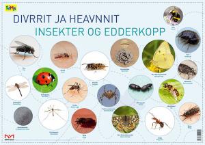 Divrrit ja heavnnit = Insekter og edderkopper