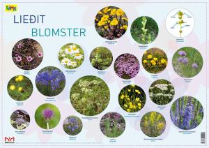 Liedit = Blomster