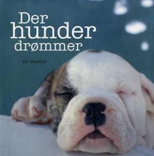 Der hunder drømmer