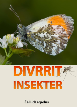 Divrrit = Insekter
