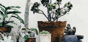 Et hus med planter