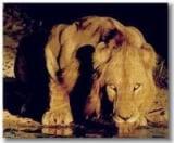 Gui Leão