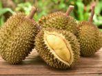 Tips Memilih Durian Manis Dan Tebal