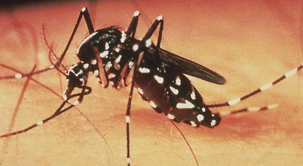 Penyakit Berbahaya Akibat Gigitan Nyamuk