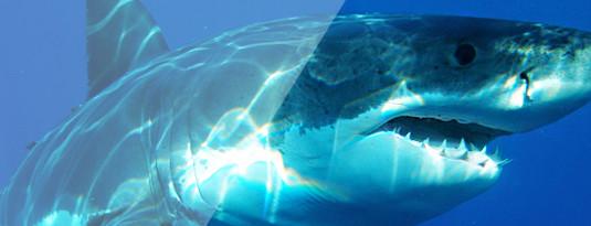 Lensbest-LensbestShop-LensbestBlog:https://res.cloudinary.com/fourcare/image/fetch/q_90/f_auto/fl_force_strip/https://www.lensbest.de/blog/LensbestBlog/20151209-10-dinge-ueber-augen/Bild_8.jpg