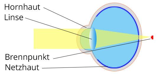 Lensbest-LensbestShop-LensbestBlog:https://res.cloudinary.com/fourcare/image/fetch/q_90/f_auto/fl_force_strip/https://www.lensbest.de/blog/LensbestBlog/20170801-weitsichtigkeit/bild1-weitsichtigkeit-535x100px-2.jpg