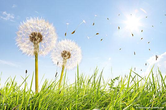 Die besten Tipps für Linsenträger mit Pollenallergie!