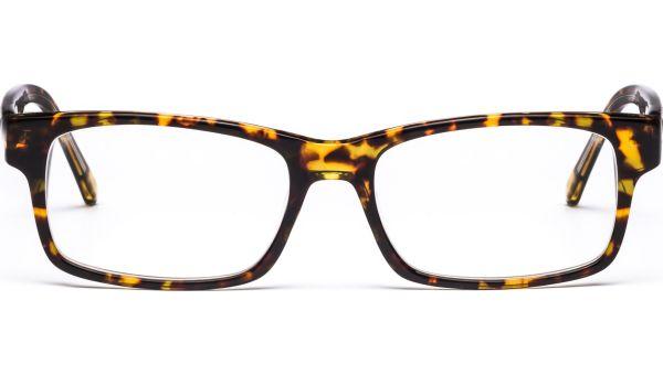 Arjun 5217 demi/braun von Lennox Eyewear