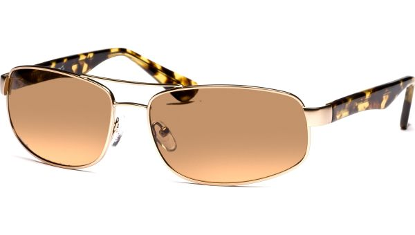 Sangita 6116 gold/demi-braun von Lennox Eyewear