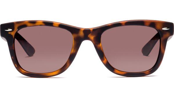 Yendra 5022 demi-braun von Lennox Eyewear