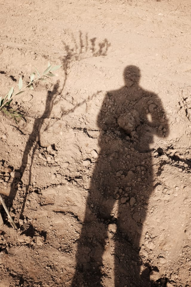 The shadow of a person (that's me, hi!) on an irrigated brown or beige field, accompanied by the shadow of an olive tree sapling.