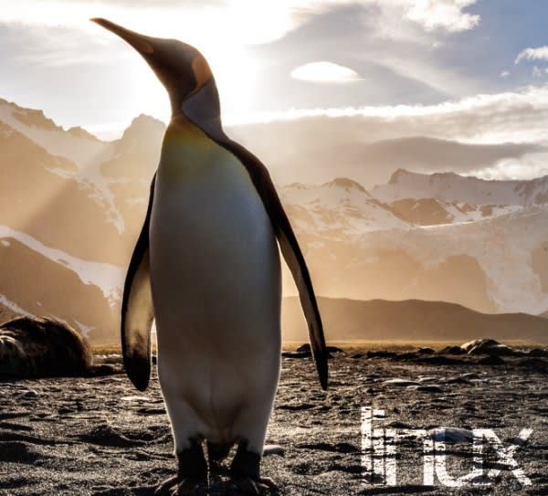 Linux & Systems Administration Training Courses