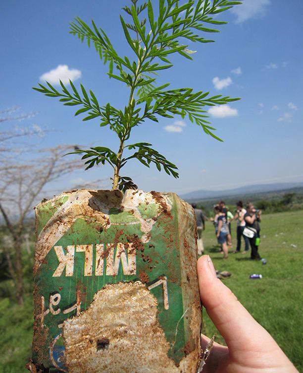 Kenya tree planting project