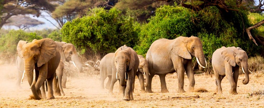 Treasures of Tanzania & Kenya