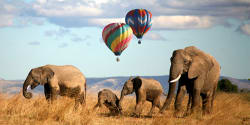Balloon safari, Masai Mara