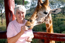 Feeding a Rothschild's giraffe, Langata Giraffe Center