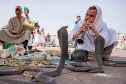 Snake charmer, Marrakesh